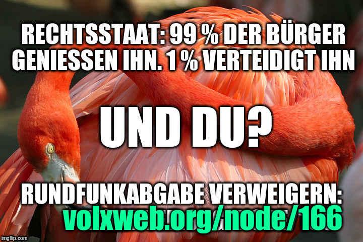 flamingo red_head  meme 99proz DU x720